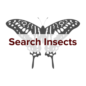 insectsearch5